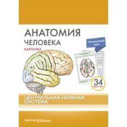 Анатомия человека. Центральная нервная система (34 карточки)